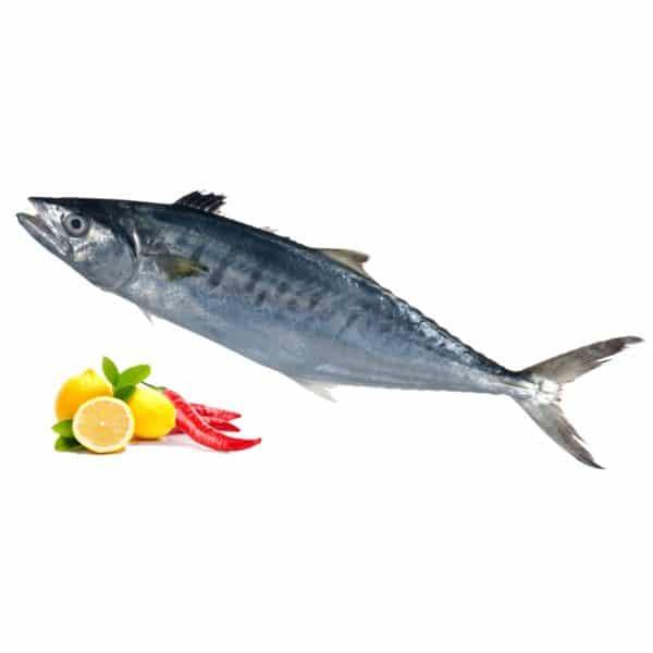 ماهی شیر و میگو